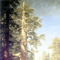 Albert Bierstadt (1830-1902) | The Great Trees, Mariposa Grove, California, 1876 | Oil on Canvas, 118 x 59 inches | Private Collection